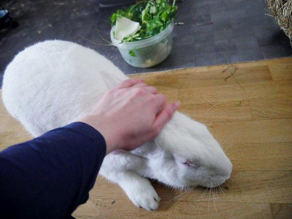 White Rabbit, association pour le placement des animaux de laboratoire