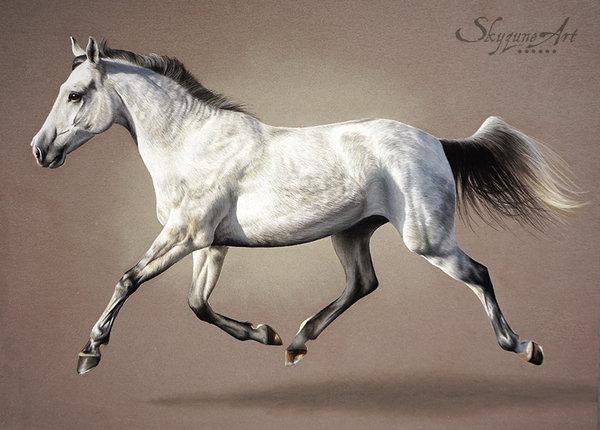 Peintre équin