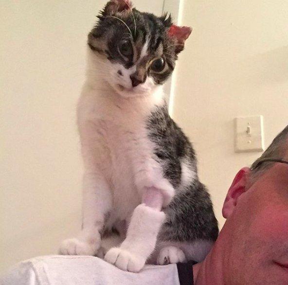 chaton sauvé du froid en rétablissement