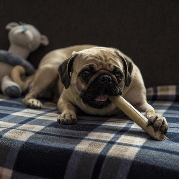 Comparatif des meilleures friandises naturelles et bio pour chien