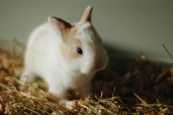 Fréquence de nettoyage de la cage à lapin