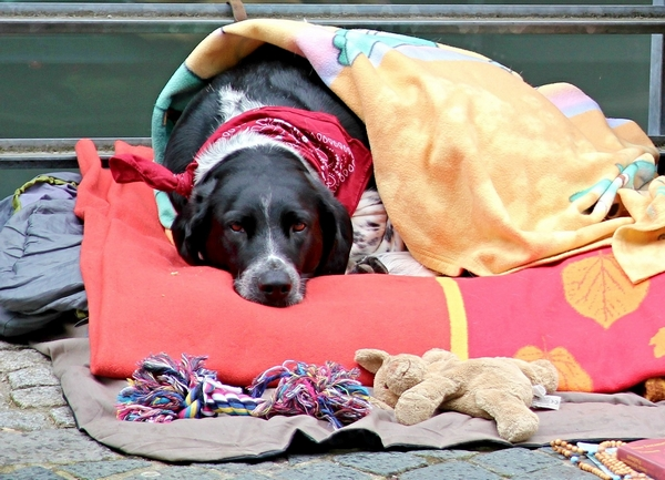 Soigner naturellement le rhume chez le chien