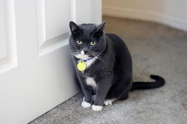 comment faire pour retrouver un chat perdu ou qui a disparu