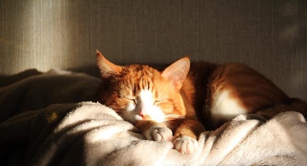 Pourquoi mon chat dort-il plus que d'habitude ? Dois-je m'inquiéter ?
