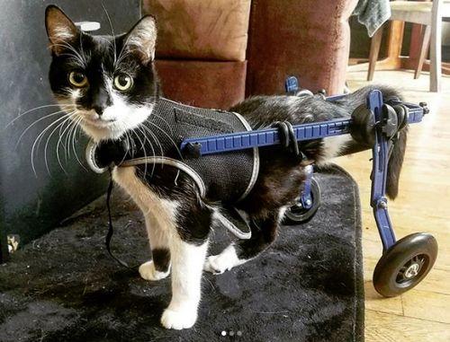 handicap chat