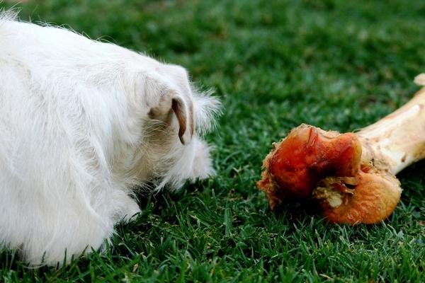 Quel os peut-on donner à son chien