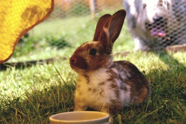 Mon lapin mange les croquettes pour chat ou chien, comment l'en empêcher ?