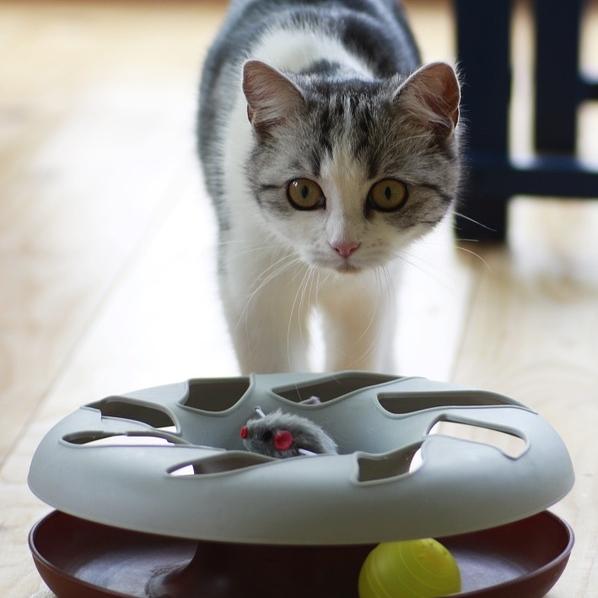 Circuit de jeu interactif pour chat d'appartement qui s'ennuie