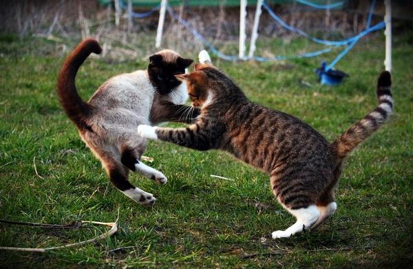 mon chat est agressif avec mon autre chat