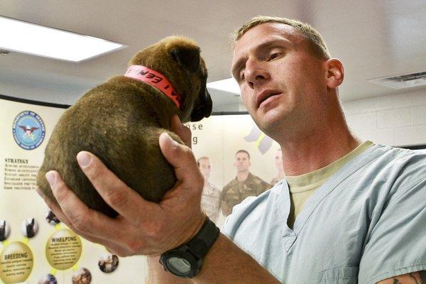Surveiller la santé du chien