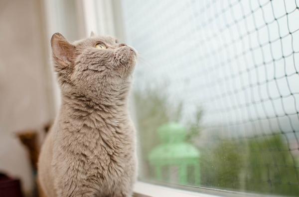 Mon chat regarde tout le temps par la fenêtre de mon appartement