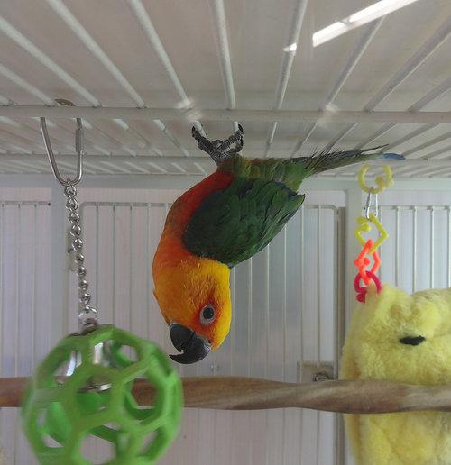 cage pour un oiseau