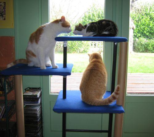 Comment choisir son arbre à chat
