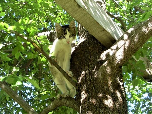 Les chats aiment se mettre en hauteur