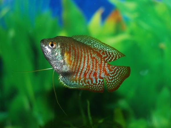 Conseils pour bien choisir ses poissons d'aquarium communautaire