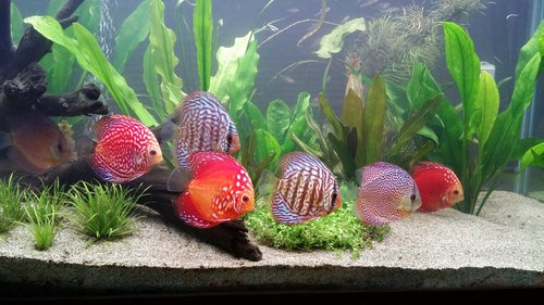 éclairage aquarium planté