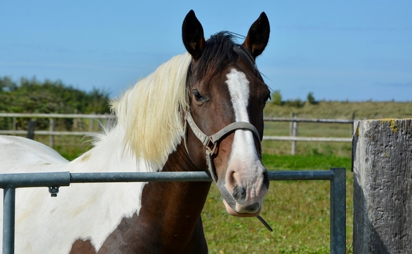 Budget d'entretien d'un cheval par mois