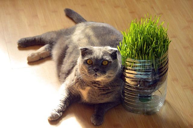 Comment faire maigrir un chat obèse ou trop gros
