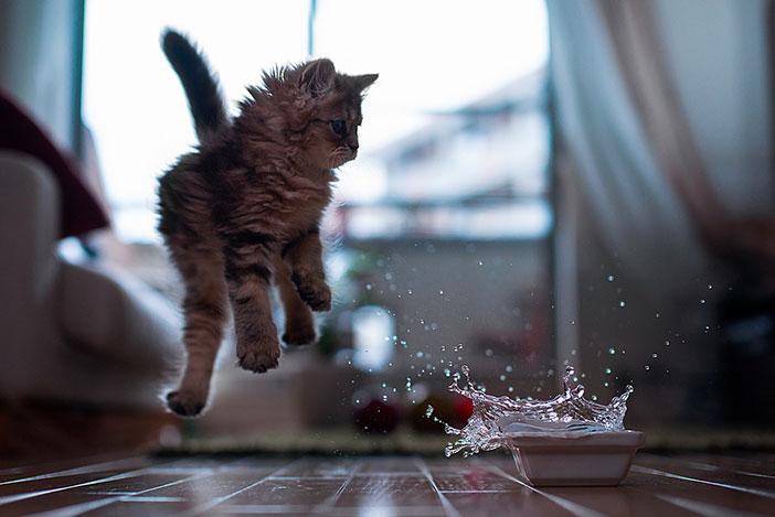 plus beau chaton monde 1