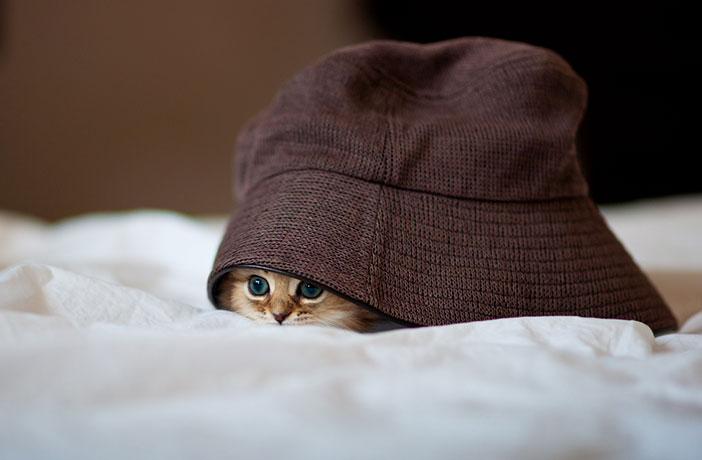 plus beau chaton monde 2