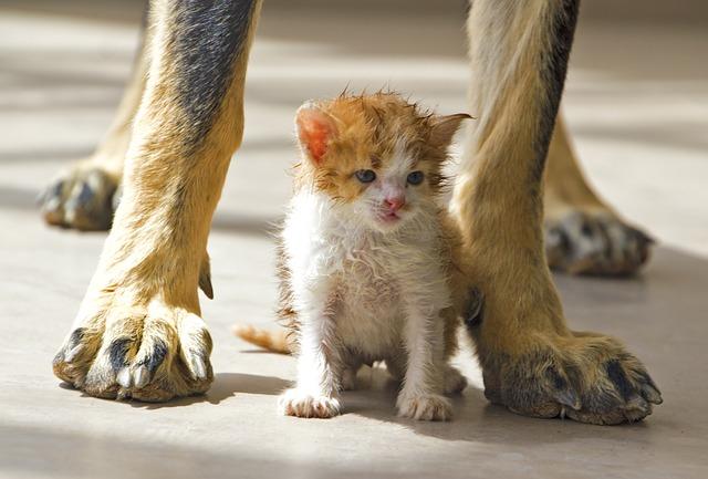 socialiser son chaton avec les animaux