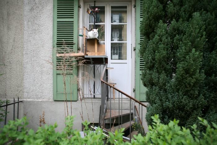escaliers pour chats en Suisse