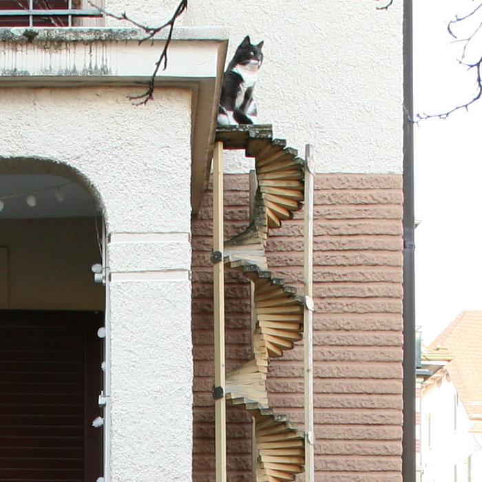 photo échelle pour chats