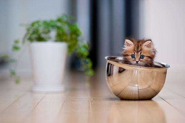 plus beau chaton monde 3