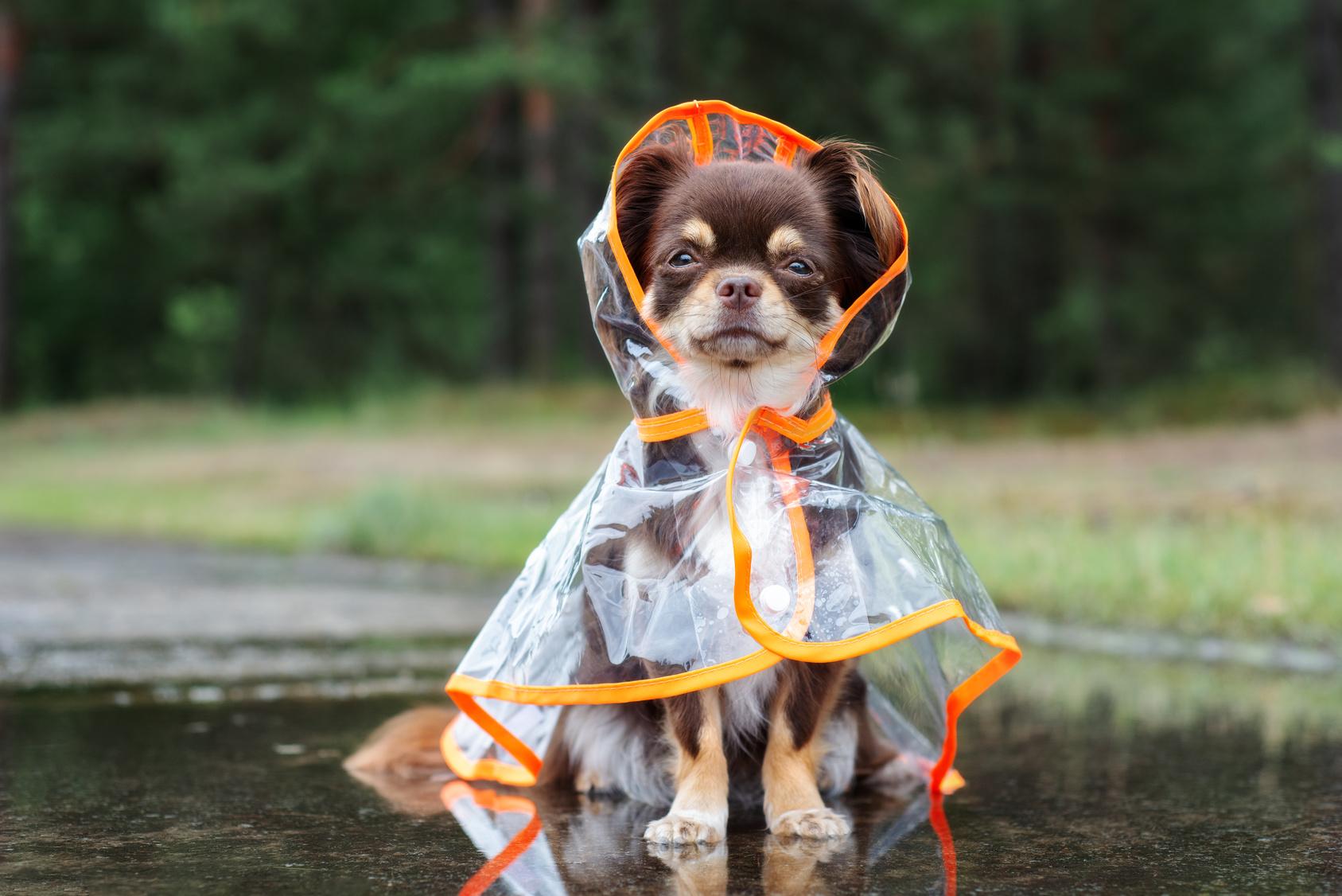 acheter manteau pour petit chien