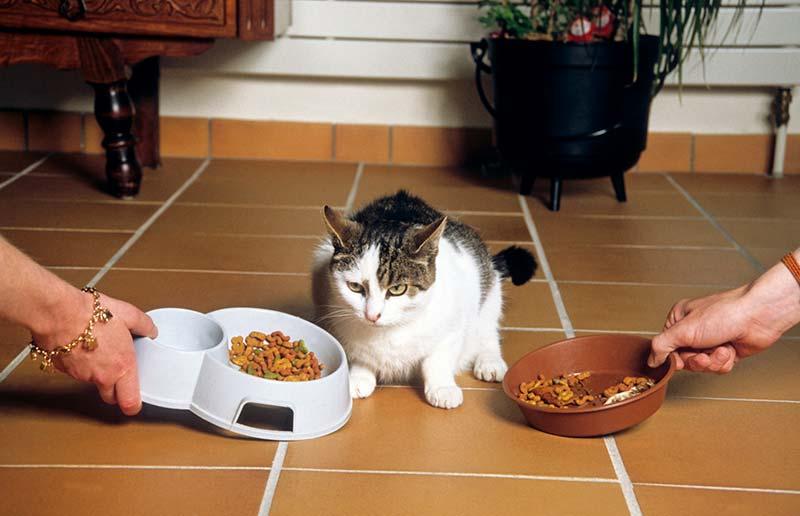 correctement nourrir son chat