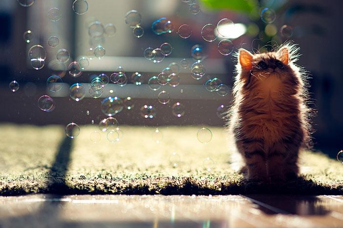plus beau chaton monde 4