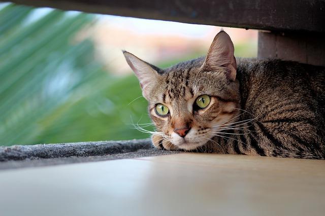 un chat qui s'isole