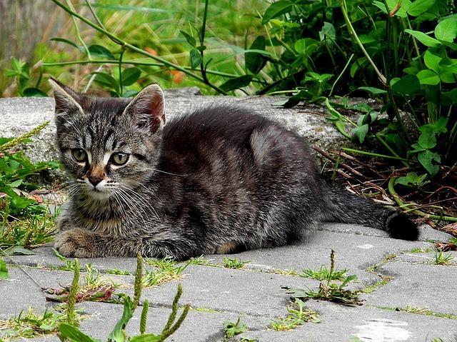 un chat qui aime être seul