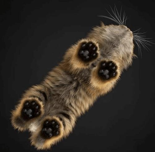 Photos de chats vus d 39 en dessous - Mon chat me colle plus que d habitude ...