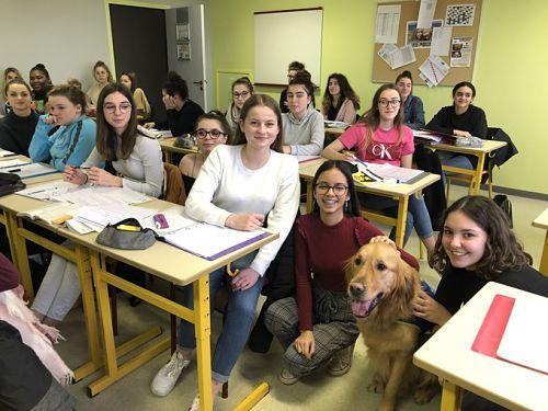 Nestea chien assistant au lycée