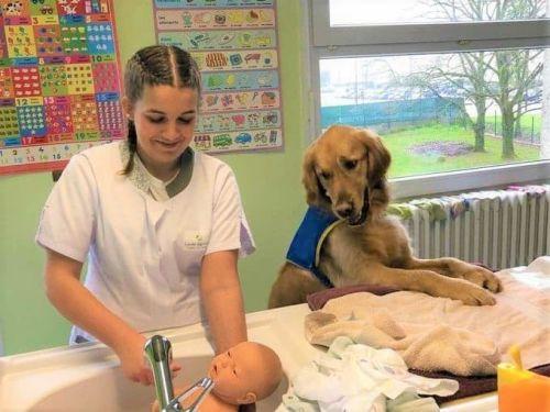 chien médiateur facilite la vie scolaire
