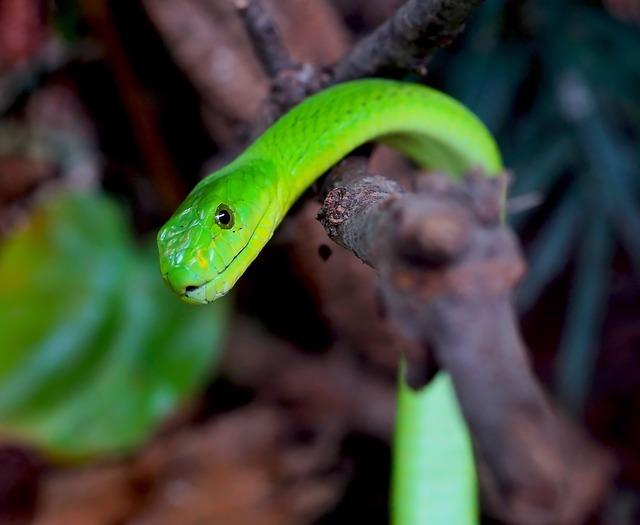 serpents pour petit terrarium