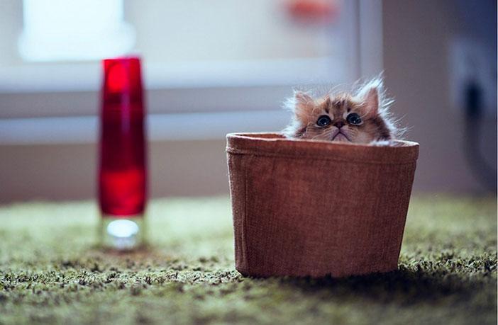 plus beau chaton monde