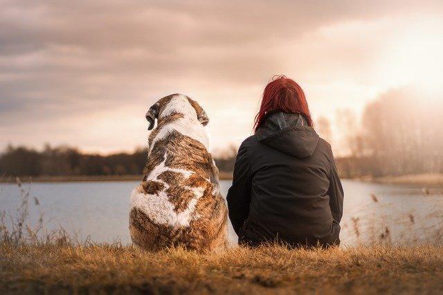 Races de chien adaptées à la solitude