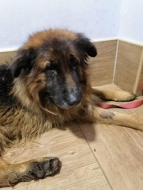 Le chien enterré vivant et survécu