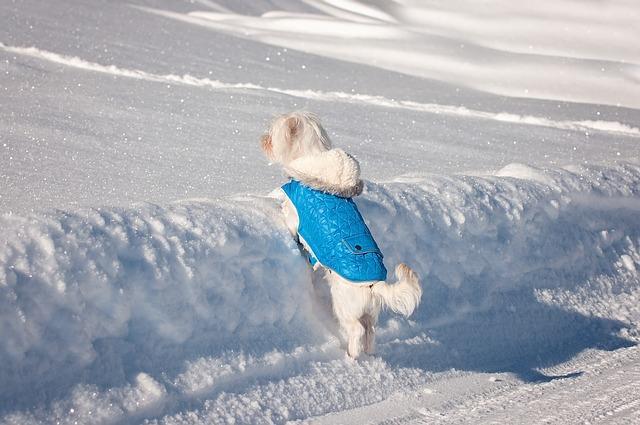 manteau pour protéger son chien