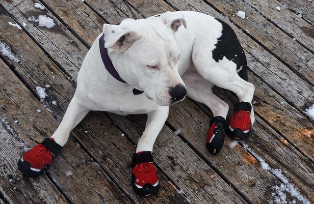 chaussons pour chien