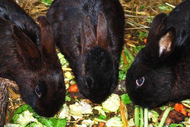 nourriture pour lapins