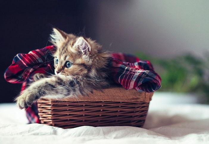 beau chaton