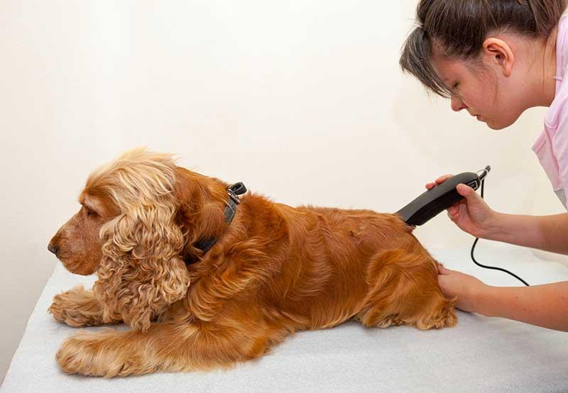 comment tondre son chien soi-même