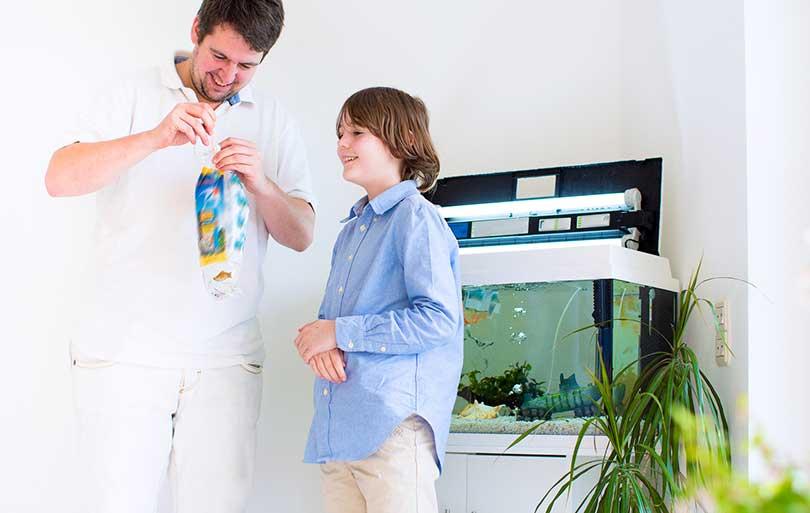comment commencer un nouvel aquarium