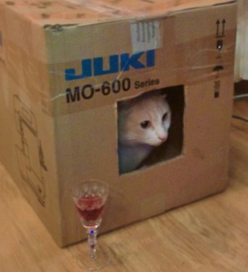 chat dans une boîte