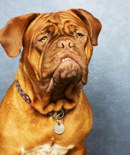 chien expression