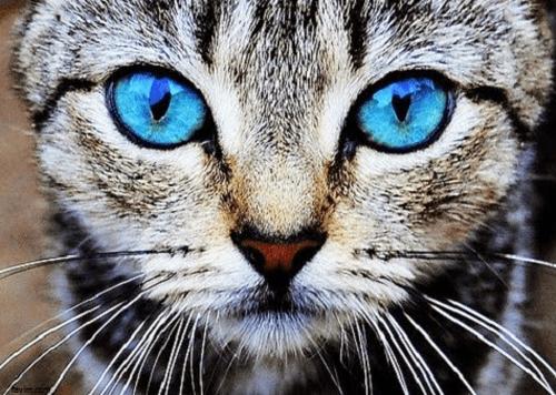 les plus beaux yeux de chat. Black Bedroom Furniture Sets. Home Design Ideas