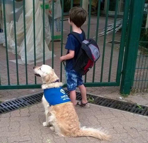 chiens aident à mieux vivre le handicap